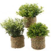 Assorted-Grass--ú5,-Debenhams
